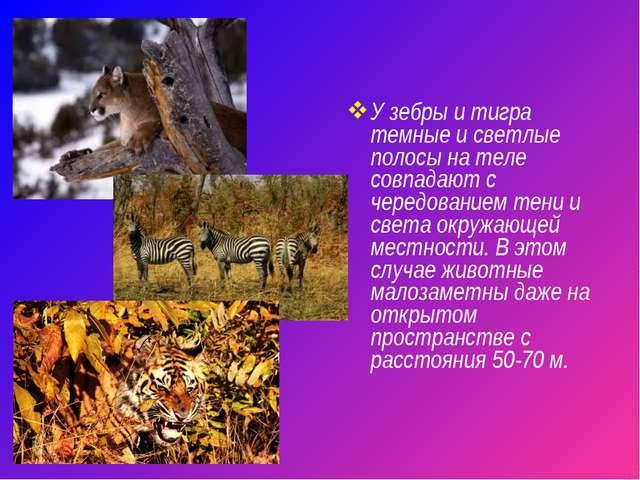 У зебры и тигра темные и светлые полосы на теле совпадают с чередованием тени...