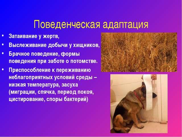 Поведенческая адаптация Затаивание у жертв, Выслеживание добычи у хищников, Б...