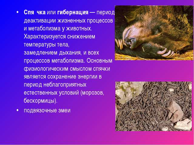 Спя́чкаилигибернация— период деактивации жизненных процессов иметаболизма...