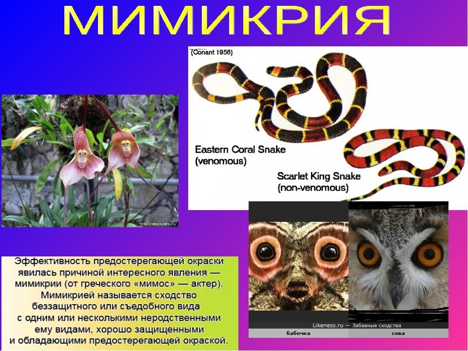 интересные факты про биологию с фото сами