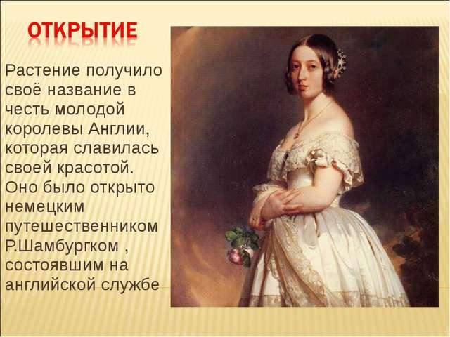 Растение получило своё название в честь молодой королевы Англии, которая слав...