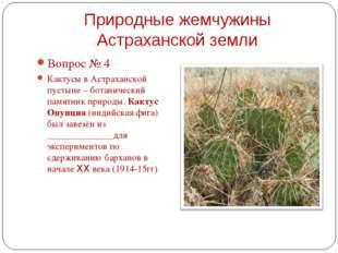 Вопрос № 4 Вопрос № 4 Кактусы в Астраханской пустыне – ботанический памятни