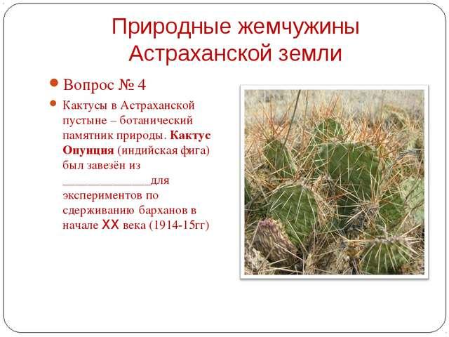 Вопрос № 4 Вопрос № 4 Кактусы в Астраханской пустыне – ботанический памятни...