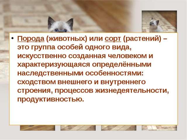 Порода (животных) или сорт (растений) – это группа особей одного вида, искус...