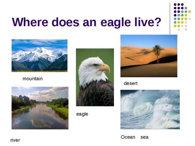 Where does an eagle live? mountain eagle desert river Ocean sea