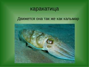 каракатица Движется она так же как кальмар