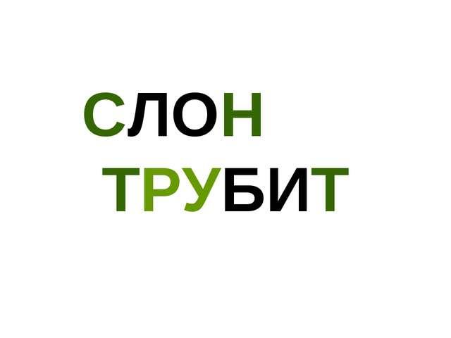 СЛОН ТРУБИТ