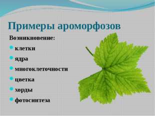 Какие ароморфозы позволили появиться наземным растениям? Рис. 350. Идиоадапт