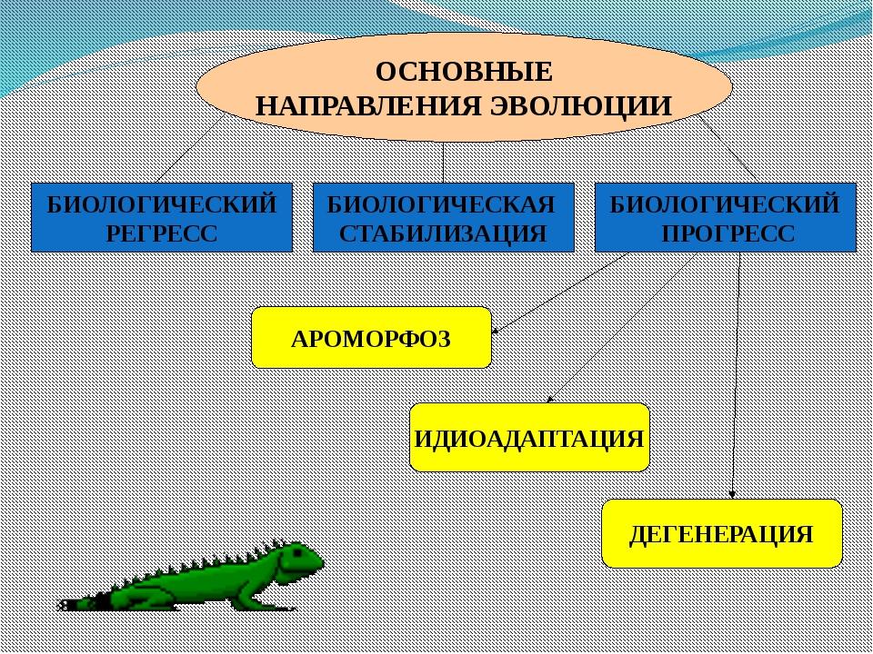 Юрский мечехвост Современные мечехвосты
