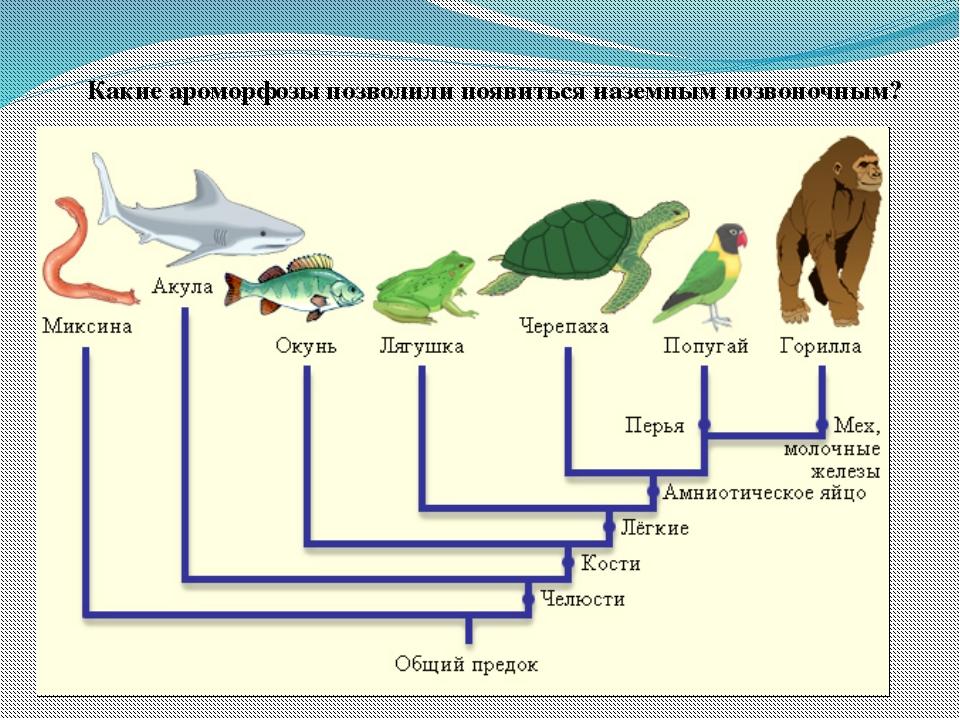 Задание для 2 группы Выявление основных ароморфозов рептилий