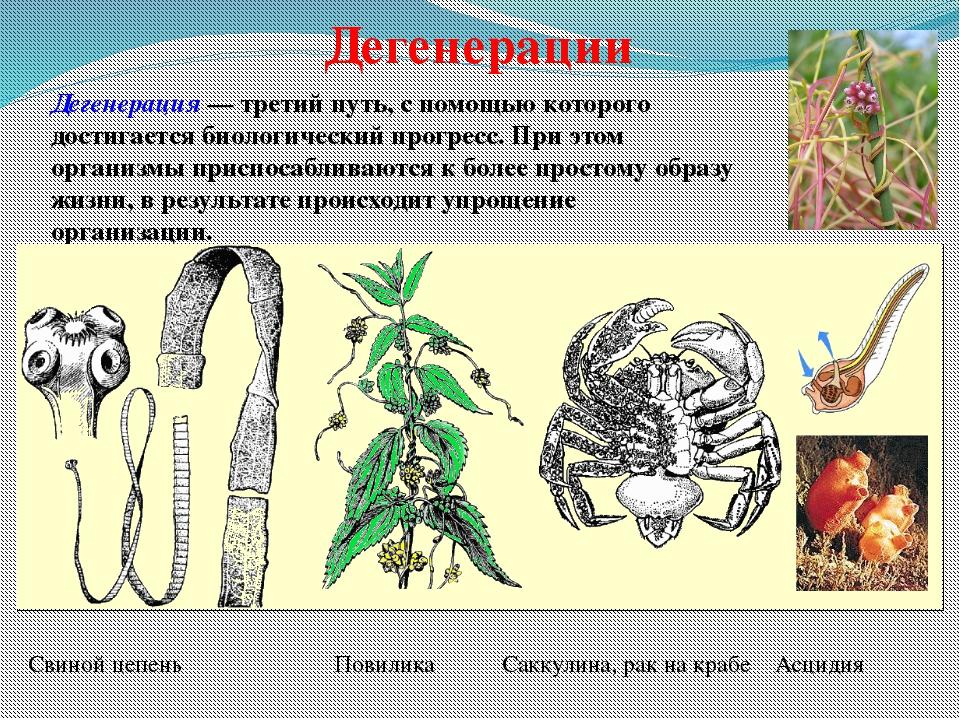 Соотношение направлений эволюции В природе все процессы эволюции идут непрер...