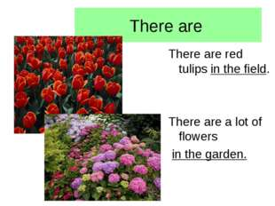 There are There are red tulips in the field. There are a lot of flowers in th