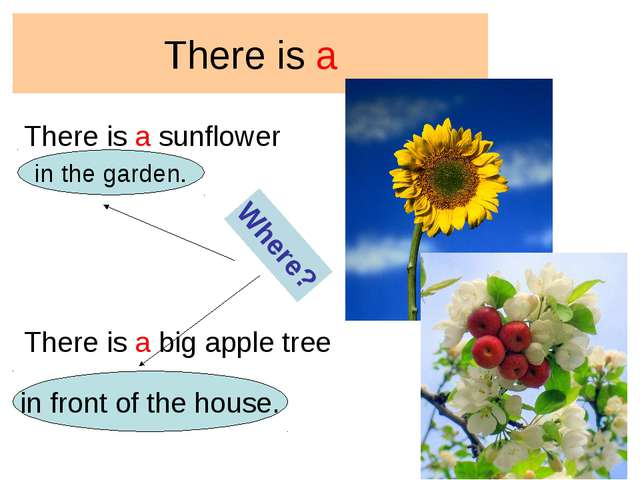 There is a There is a sunflower There is a big apple tree Where? in the garde...