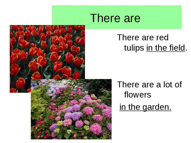 There are There are red tulips in the field. There are a lot of flowers in th...