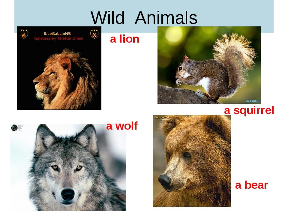 Wild Animals a lion a squirrel a wolf a bear