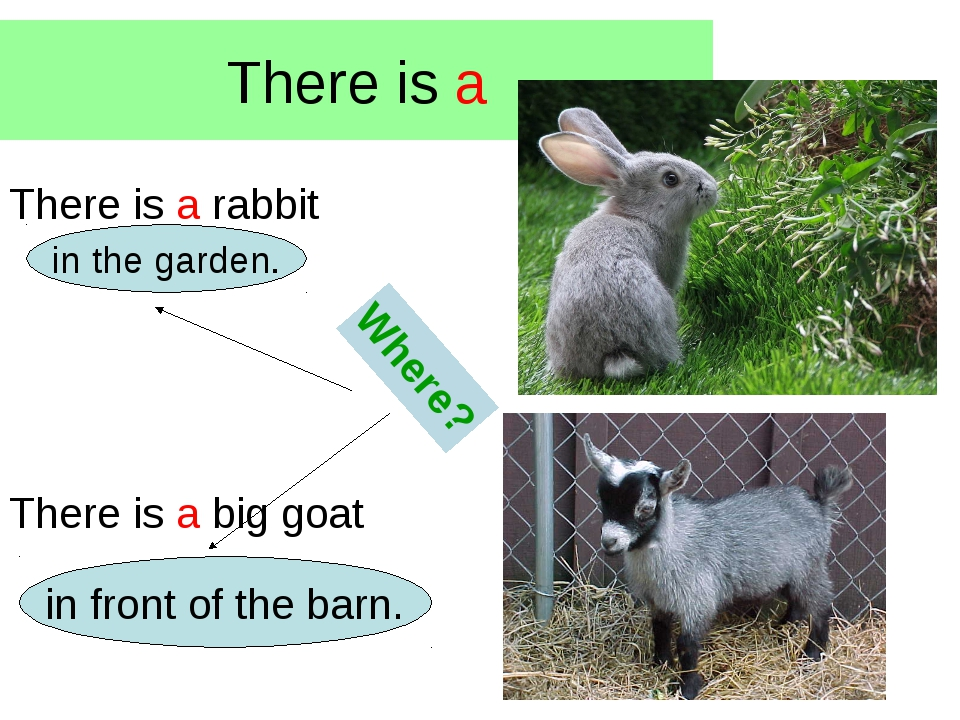 There is a There is a rabbit There is a big goat Where? in the garden. in fro...