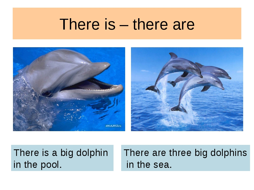 There is – there are There is a big dolphin in the pool. There are three big...