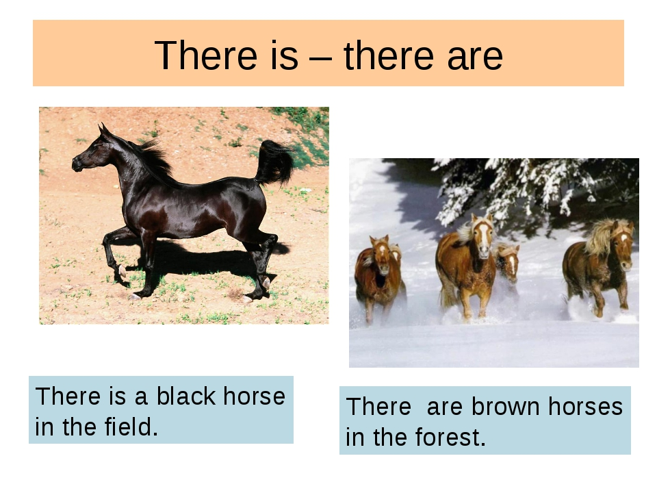 There is – there are There is a black horse in the field. There are brown hor...