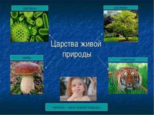 Царства живой природы бактерии растения грибы животные человек – часть живой