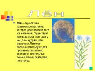 Лён – однолетнее травянистое растение, которое даёт волокно того же названия.