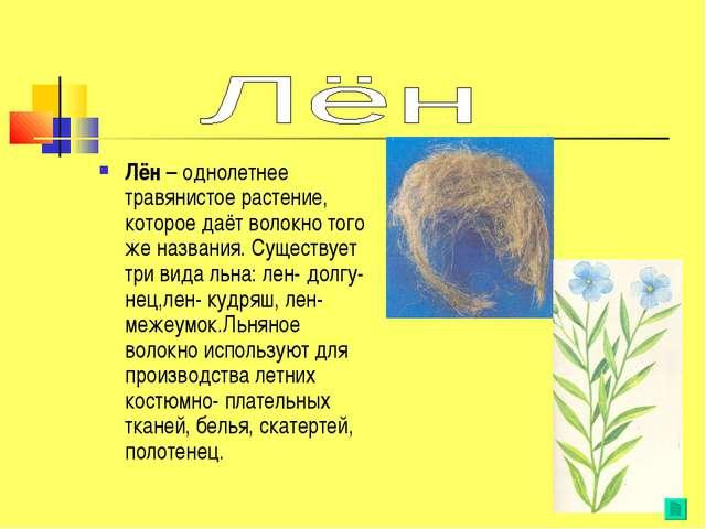 Лён – однолетнее травянистое растение, которое даёт волокно того же названия....