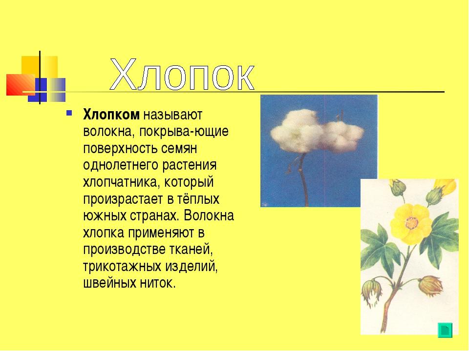 Хлопком называют волокна, покрыва-ющие поверхность семян однолетнего растения...