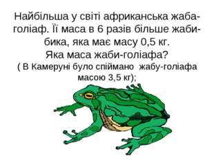 Найбільша у світі африканська жаба-голіаф. Її маса в 6 разів більше жаби-бика