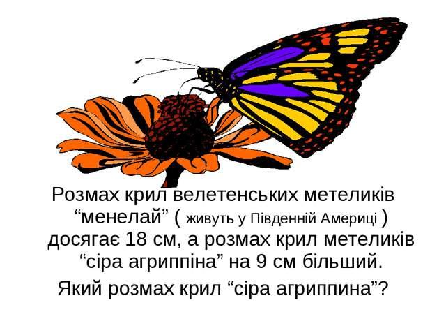 """Розмах крил велетенських метеликів """"менелай"""" ( живуть у Південній Америці )..."""