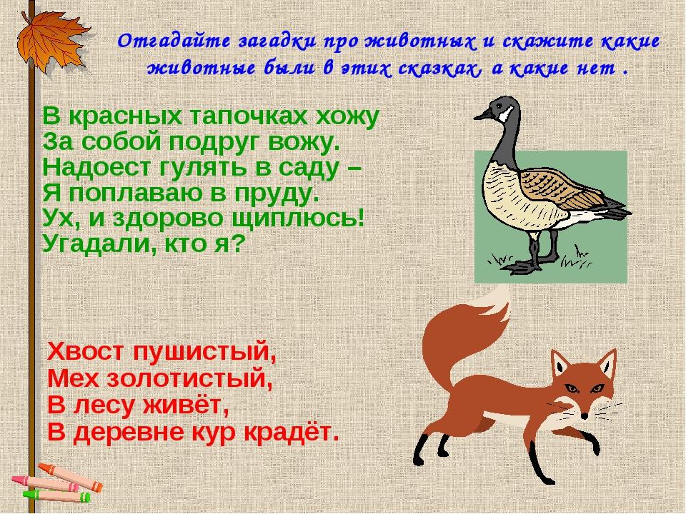 Сценарий загадки о животных