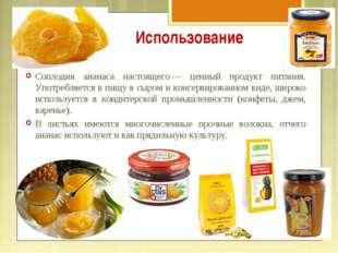 Использование Соплодия ананаса настоящего— ценный продукт питания. Употребля