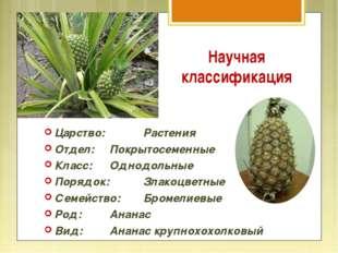 Научная классификация Царство:Растения Отдел:Покрытосеменные Класс:Однодо