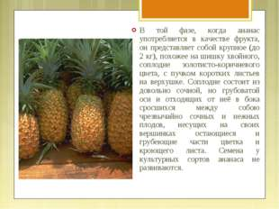В той фазе, когда ананас употребляется в качестве фрукта, он представляет соб