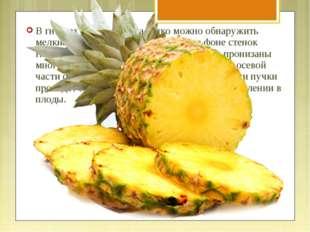 В гнёздах спелого плода легко можно обнаружить мелкие семяпочки, выделяющиеся