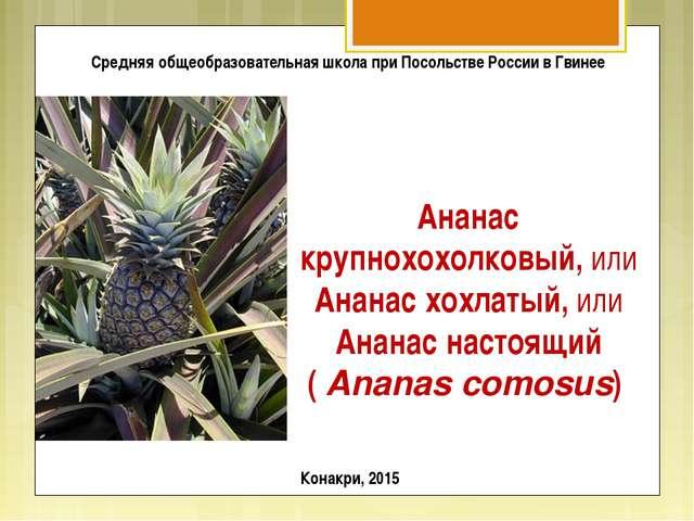 Ананас крупнохохолковый, или Ананас хохлатый, или Ананас настоящий (Ananas c...