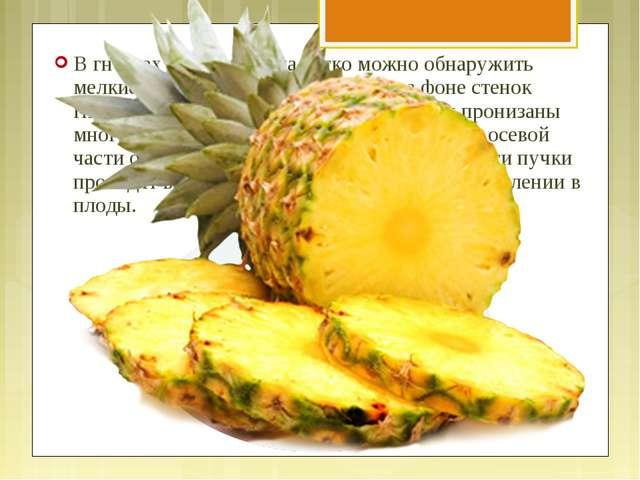 В гнёздах спелого плода легко можно обнаружить мелкие семяпочки, выделяющиеся...