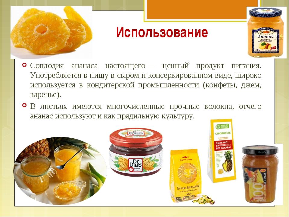 Использование Соплодия ананаса настоящего— ценный продукт питания. Употребля...