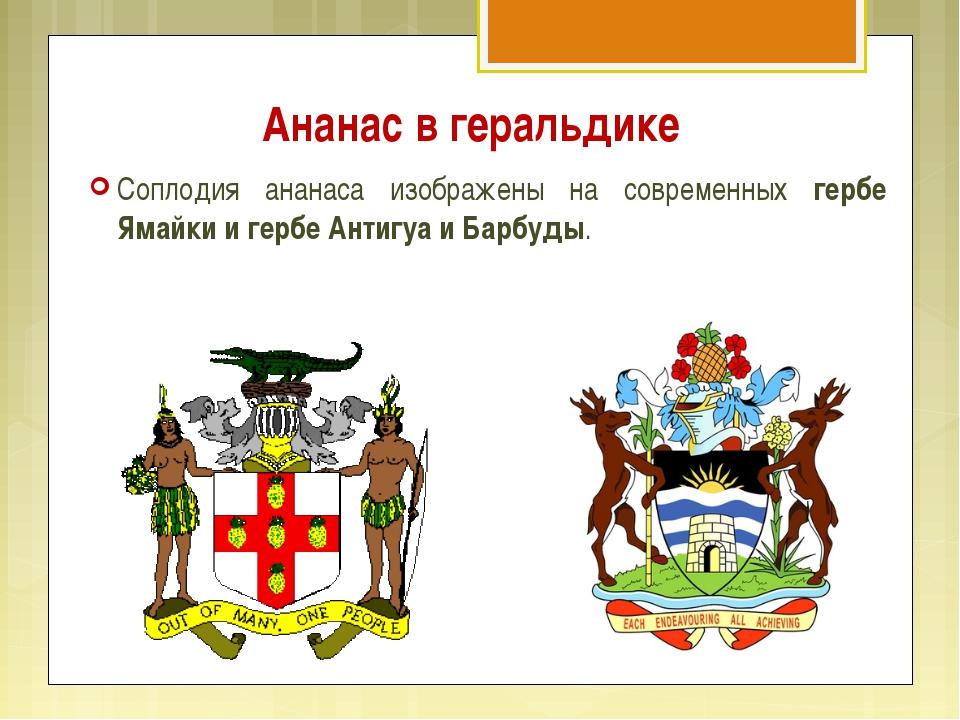Ананас в геральдике Соплодия ананаса изображены на современных гербе Ямайки и...