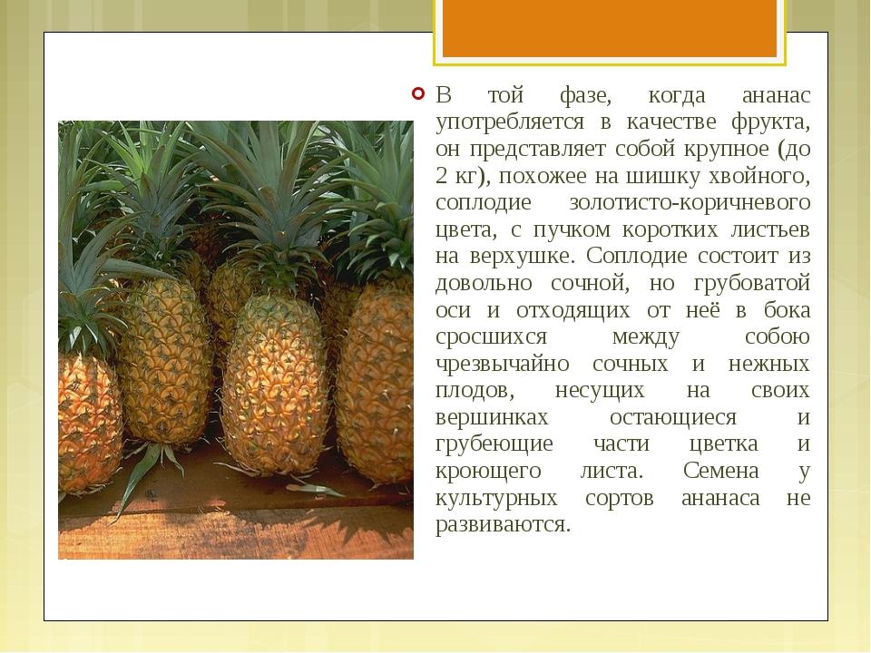 В той фазе, когда ананас употребляется в качестве фрукта, он представляет соб...