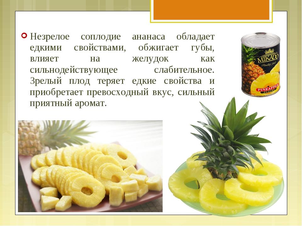 Незрелое соплодие ананаса обладает едкими свойствами, обжигает губы, влияет н...