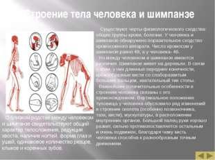 Строение тела человека и шимпанзе О близком родстве между человеком и шимпанз