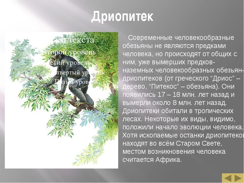 Дриопитек Современные человекообразные обезьяны не являются предками человека...