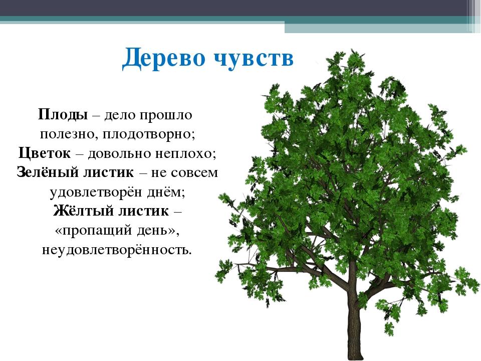 Дерево чувств Плоды – дело прошло полезно, плодотворно; Цветок – довольно неп...