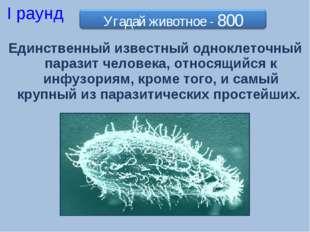 Единственный известный одноклеточный паразит человека, относящийся к инфузори
