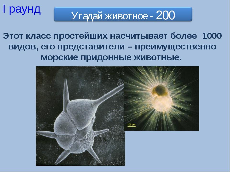 I раунд Этот класс простейших насчитывает более 1000 видов, его представители...