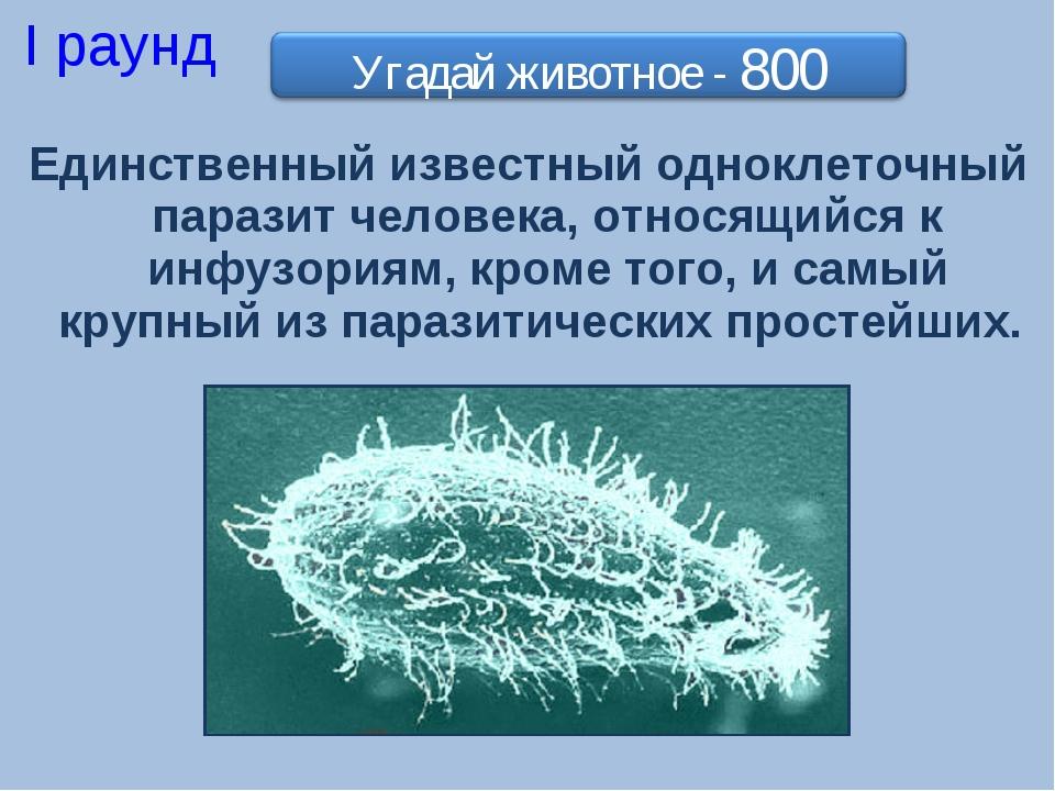 Единственный известный одноклеточный паразит человека, относящийся к инфузори...