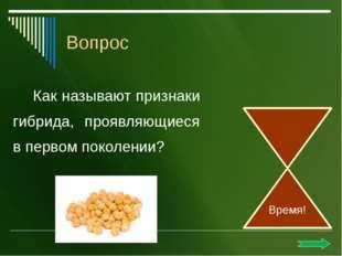 Бактериофаги. Ответ