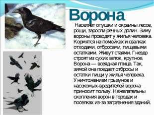 Ворона Населяет опушки и окраины лесов, рощи, заросли речных долин. Зиму воро