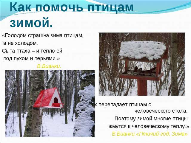 Как помочь птицам зимой. «Голодом страшна зима птицам, а не холодом. Сыта пта...