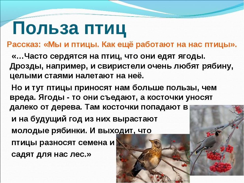Польза птиц Рассказ: «Мы и птицы. Как ещё работают на нас птицы». «…Часто сер...