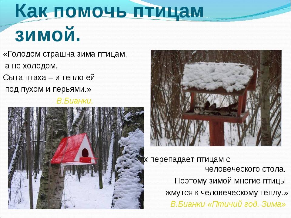 картинка как помочь птицам зимой этом прежде чем